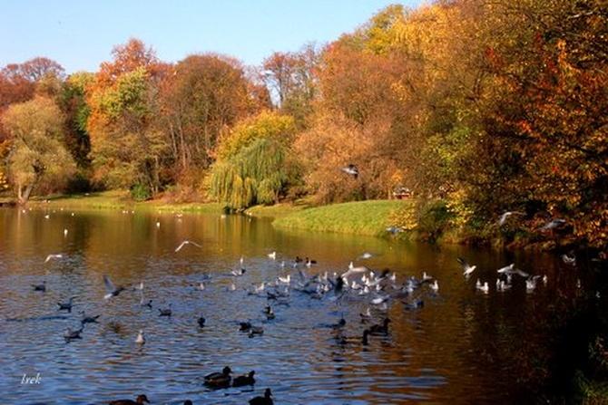 Drzewa i ptactwo jesienią