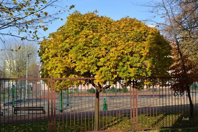 Drzewko, które nie zgubiło jeszcze liści