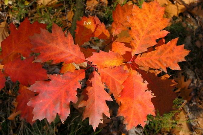 Jesień idzie przez las.