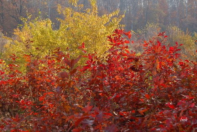 Jesień na skraju lasu