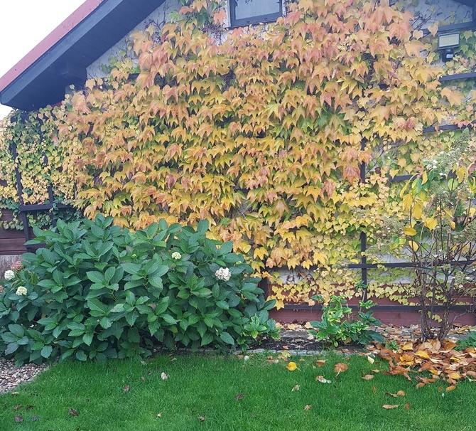 jesienna szata