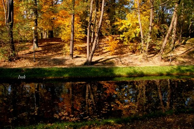 Jesienne drzewa nad kanałkiem w parku