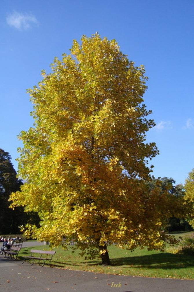 Jesienne drzewo w parku