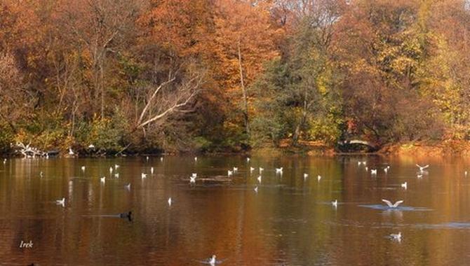 Kolorowy staw jesienią w parku.
