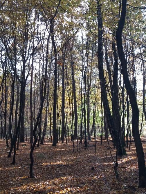 Las porozścielał dywany :)