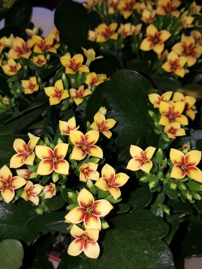 Małe drobne kwiatki...
