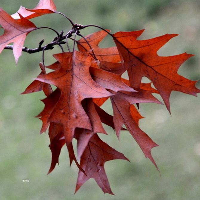 Mamy jesień w pełni