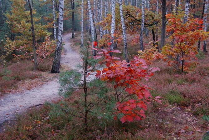 Na szlaku w Mazowieckim Parku Krajobrazowym