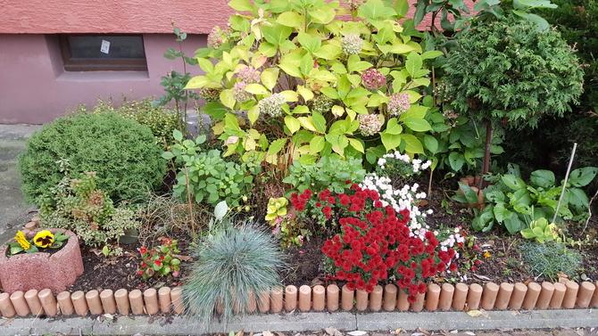 Ogródek przyblokowy....