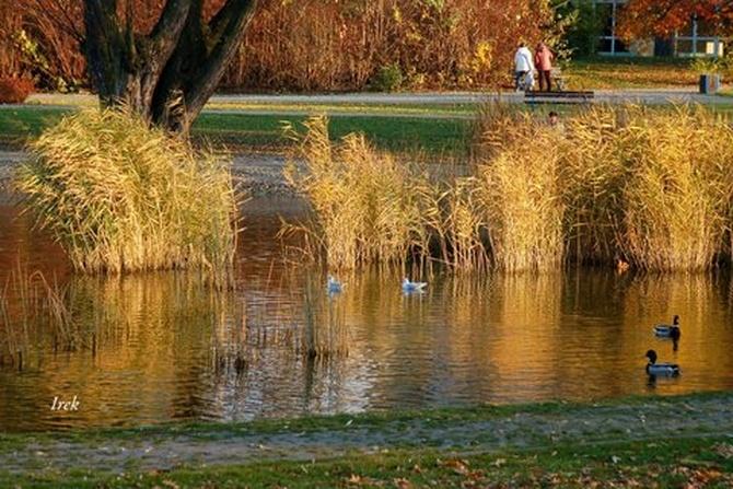 Ozdobne trawy jesienią w parku