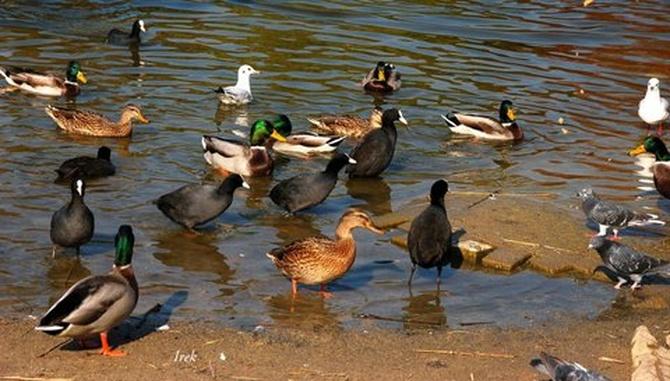 ptaki w parku jesienią