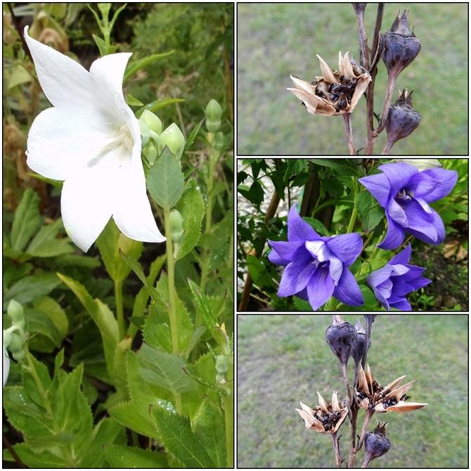 Rozwar-kwiaty i nasiona