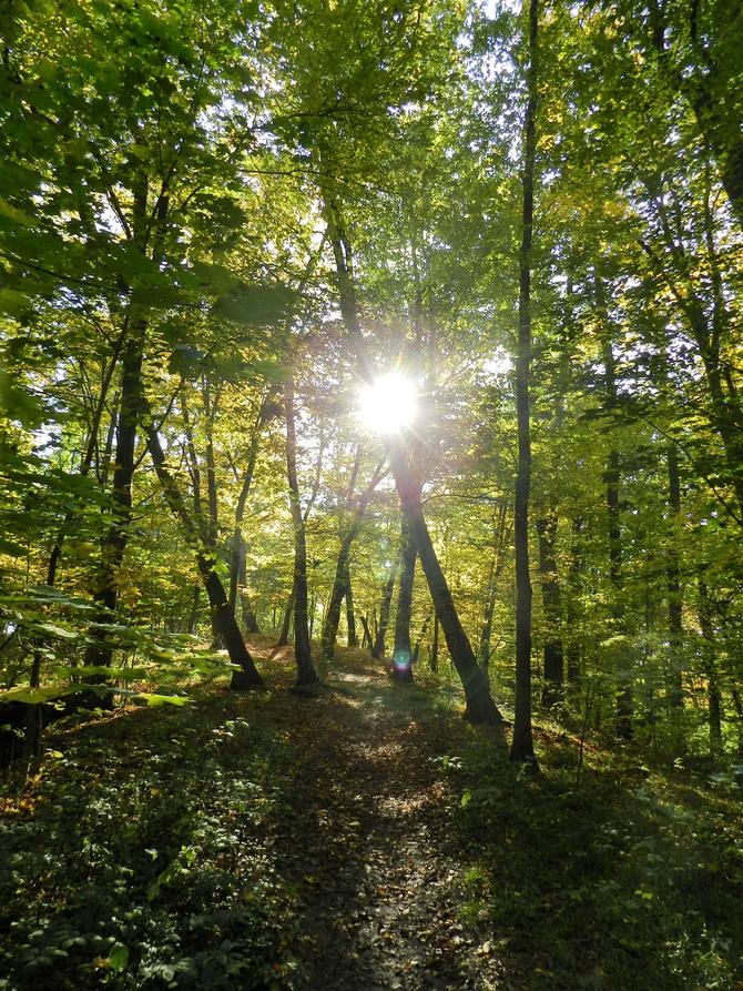 Tak wygląda zielony las jesienią