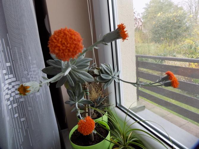 W domu też kwiatowo :)