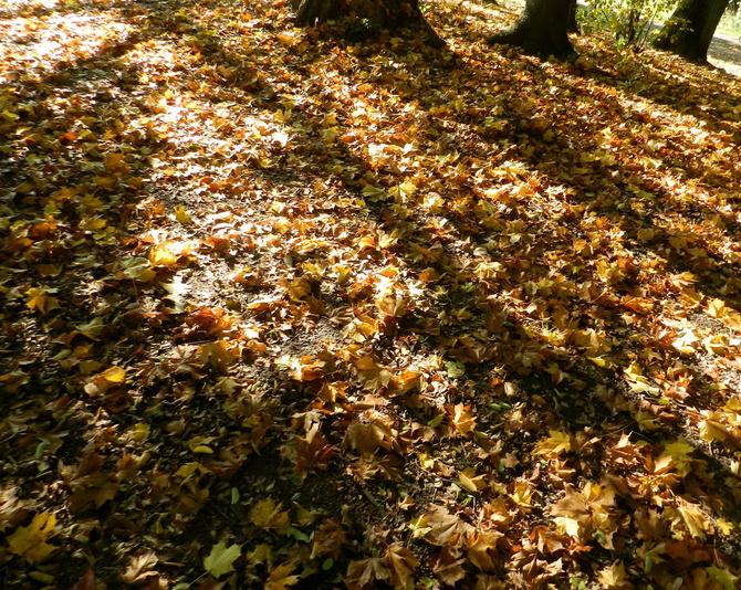 W parku,dywan z liści