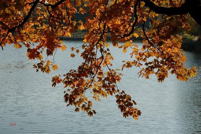 Jesień nad stawem