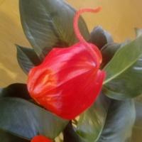 9 lat w Świecie Kwiatów