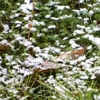 Białe kwiatki w trawniku;)