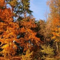 Drzewa jesienne w parku