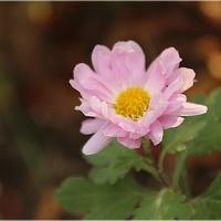 Jednym kwiatkiem...