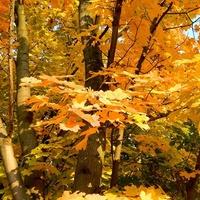 Jesień obsypała złotem:)