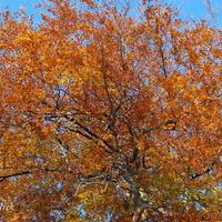Jesień potrafi być piękna