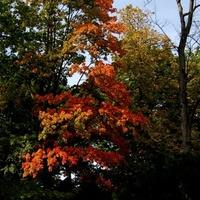 Jesień zagląda nieśmiało do parku