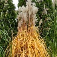 Jesienne barwy traw