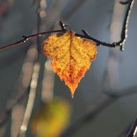 Jesiennie Się Zrobi