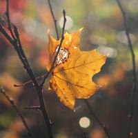 Jesienny Liść :)