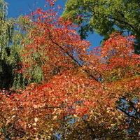 Kolorowe jesienne drzewa