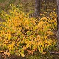 Krzew jesienny w lesie