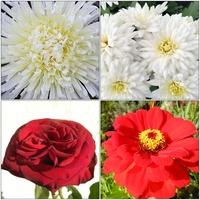 Kwiaty białe i czerwone