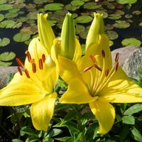Kwiaty jak słoneczka