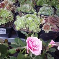Kwiaty w OPolu...