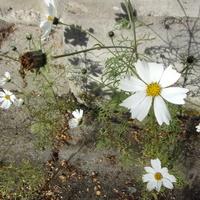 Kwiatki na betonie...