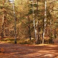 Las na obrzeżach Warszawy
