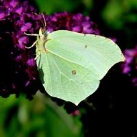 Motylki też miewają pod górkę;)