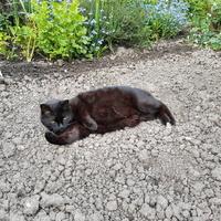 na dzień czarnego kota:)