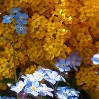 Żółty i błękitny