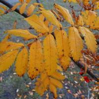 Żółty jesienny liść. . . . . . . .