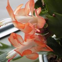 Odlotowe kwiatuszki :)