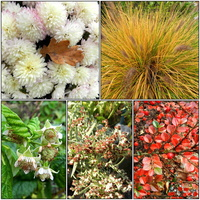 Roślinki W Ogrodzie