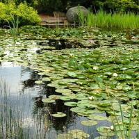 Rośliny wodne w Aboretum w Rogowie