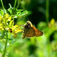Słonecznie z motylkiem:)