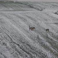 Sachalińskie klimaty :)