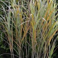 Trawy ozdobne jesienią