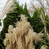Trawy ozdobne w moim ogrodzie