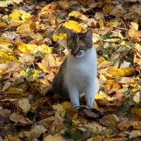 Tyle tej jesieni....