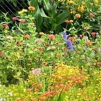 Wesoły ogród:)